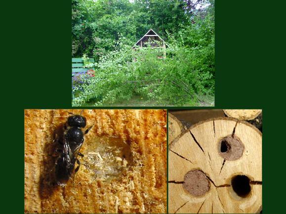 insektenhotel seite 2. Black Bedroom Furniture Sets. Home Design Ideas